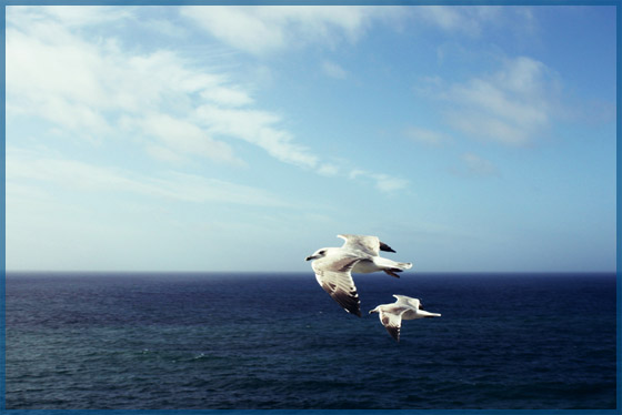 Two seagulls flying over the blue ocean with white puffy clouds for the August 2017 newsletter.